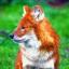 Foxen Anime <